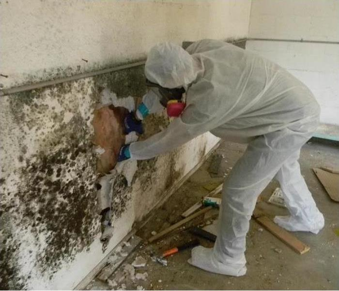Commercial Mold Remediation To A Building